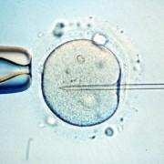 Miniútero de silicona para madurar embriones sanos